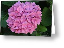 Pink Hydrangea All Profits Benefit Hospice Of The Calumet Area Greeting Card