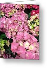 Pink Hydrangeas Greeting Card