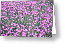 Pink Incarnated Greeting Card