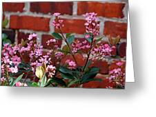 Pink Indian Hawthorne Greeting Card