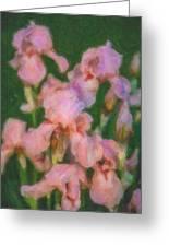 Pink Iris Family Greeting Card