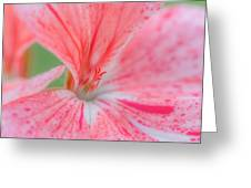 Pink Is Beautiful Greeting Card