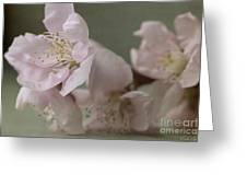 Pink Is The Color Of Happiness Greeting Card