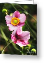 Pink Japanese Anemone Greeting Card