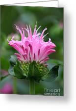 Pink July Greeting Card