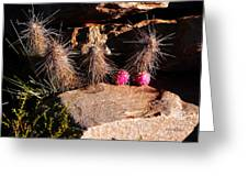 Pink Lady Cactus Greeting Card