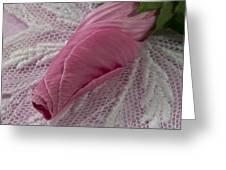 Pink Lavatera Bud Macro Greeting Card
