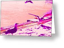 When Seagulls Are Living The Pink Life  Greeting Card