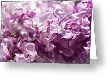 Pink Lilacs Closeup - Featured 3 Greeting Card