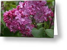 Pink Lilacs Greeting Card