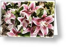 Pink Lilies I Greeting Card