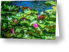 Pink Lilly Flowers And Pads Greeting Card