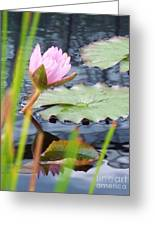 Pink Lily And Pads Greeting Card