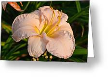 Pink Lily At Sunset 1 Greeting Card