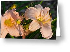 Pink Lily At Sunset 2 Greeting Card