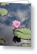 Pink Lily Monet Greeting Card