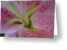 Pink Lily Greeting Card by Nancy Edwards