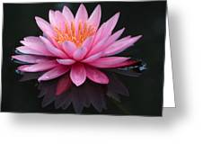 Pink Lily With Reflection Greeting Card