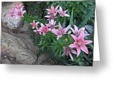 Pink Lilys Greeting Card