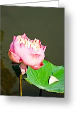 Pink Lotus And Leaf In A Pond Greeting Card