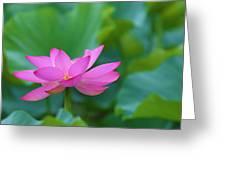 Pink Lotus Blossom Greeting Card