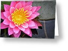Pink Lotus Flower - Zen Art By Sharon Cummings Greeting Card