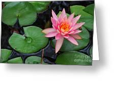 Pink Lotus Love Greeting Card