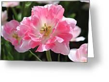 Pink Love Tulip Greeting Card