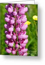 Pink Lupine Flower Greeting Card