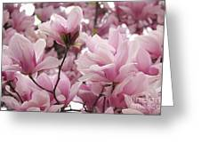Pink Magnolia Blossoms Washington Dc Greeting Card