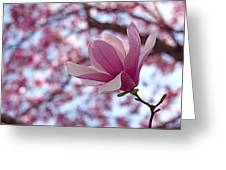 Pink Magnolia Greeting Card by Rona Black