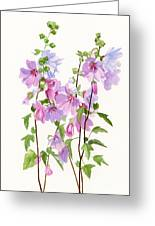 Pink Mallow Flowers Greeting Card