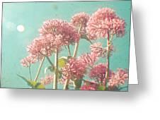 Pink Milkweed Greeting Card