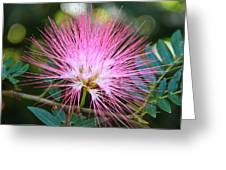 Pink Mimosa Flower Greeting Card