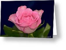 Pink Mist 8498 Greeting Card