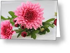 Pink Mums Greeting Card