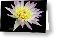 Pink N Yellow Water Lily Too Greeting Card