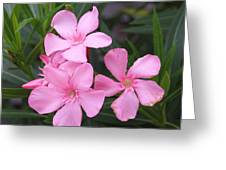 Pink Oleander 3 Greeting Card