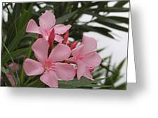 Pink Oleander 4 Greeting Card