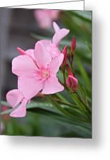 Pink Oleander 5 Greeting Card