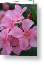 Pink Oleander 6 Greeting Card