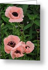 Pink On The Bridge Of Flowers  Greeting Card