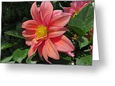 Pink Orange Center Flower Greeting Card