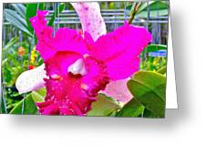 Pink Orchid At Maerim Orchid Farm In Chiang Mai-thailand Greeting Card