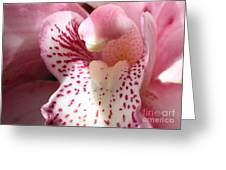 Pink Orchid Closeup Greeting Card
