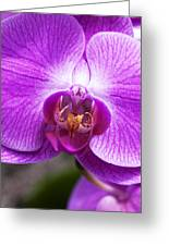 Pink Orchid Detail Greeting Card