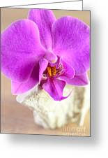 Pink Orchid On White Colored Driftwood Greeting Card by Sabine Jacobs