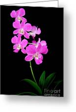 Pink Orchids 9 Greeting Card