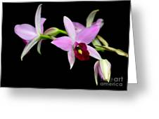 Pink Orchids Cascading Greeting Card