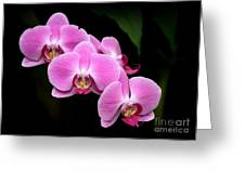Pink Orchids In A Row Greeting Card